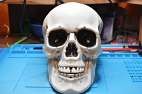 21 cm plastic Skull front view