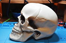 21 cm plastic Skull side view